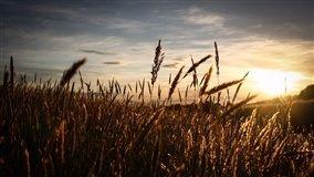 No Rio Grande do Sul, o semeio deve se iniciar em maio