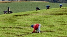 Agricultura familiar seria protagonista contra a fome