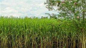 Equipamento será destaque da Piccin Implementos Agrícolas durante a 15ª Agronegócios Copercana em Sertãozinho-SP