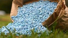 Ao longo da safra, são feitas de duas a três aplicações de salitre