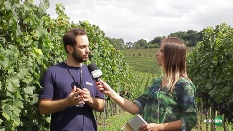 Grupo Miolo produz cerca 12 milhões de litros de vinhos e espumantes no Brasil