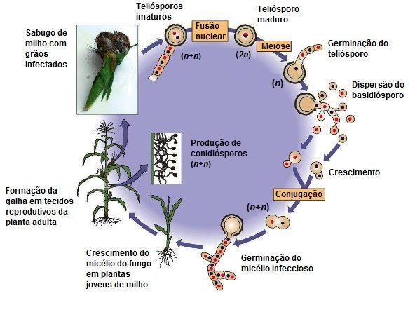 nem patogén parazita