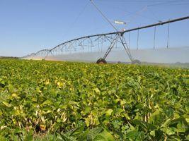 Crise hídrica no DF: sistemas eficientes e manejo correto de irrigação contribuem para o uso racional da água