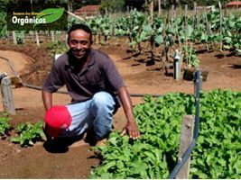 Dia Nacional da Alimentação na Escola: a agricultura familiar na merenda das crianças