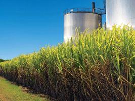 Novas variedades de cana aumentam produtividade e lucro nos canaviais