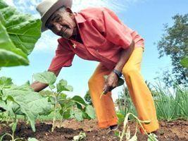 Acordo Conab e BNDES: investimento na agricultura familiar é de R$ 13 milhões
