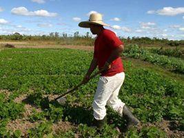 Investimento na agricultura familiar dá frutos na Paraíba