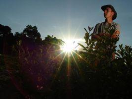 Bônus beneficia agricultores familiares de diversos estados