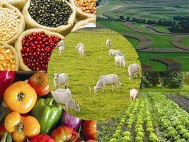 Show Rural - Export Agro/Cepea: câmbio ainda não compensa redução dos preços em dólar na média do ano