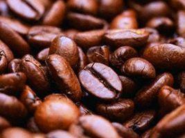 Café/Cepea: Rondônia inicia colheita de robusta da safra 2016/17