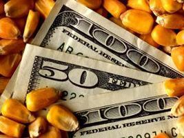 Milho recupera preço com ajuste técnico – Análise Agrolink