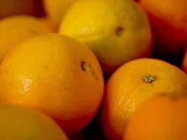 Safra da laranja segue com preços estáveis no Paraná