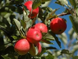 Em visita a São Joaquim, Blairo descarta abrir mercado brasileiro à importação de maçã chinesa