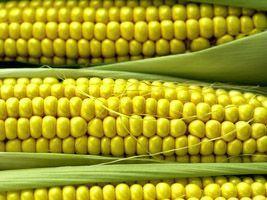 Condições das lavouras de milho nos Estados Unidos