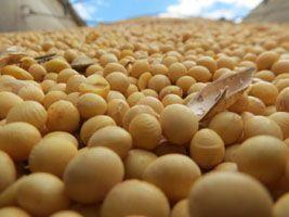 Exportações de soja devem atingir recorde de 48.5 milhões de toneladas
