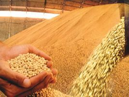 Produção de grãos da China deve cair 2,5% até 2020 por reabilitação de terras