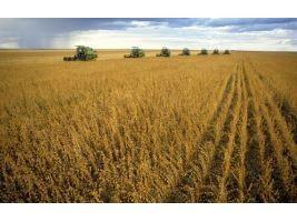 Importação de soja do Brasil pela China cresce 52,3% em setembro