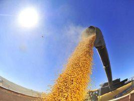 No segundo ano de retração, EUA terão menor plantio de grãos em cinco anos