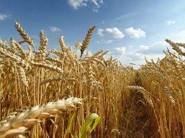 Ucrânia já embarcou 70% de potenciais exportações de trigo da safra 2016/17