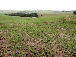 Chuvas danificaram 5% das lavouras de trigo do Rio Grande do Sul, diz Emater