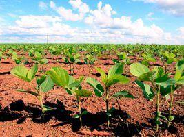 Adapar altera portaria de semeadura e colheita de soja
