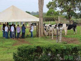 Dia de campo da Embrapa apresentou inovações em biotécnicas de reprodução animal para a pecuária