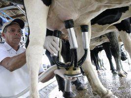 Queda nos custos de produção da pecuária leiteira em novembro