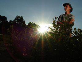 Preços Agropecuários acumulam alta de 1,45% em fevereiro