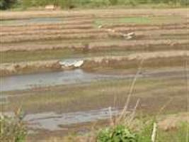 Dia de campo aborda plantio em áreas de várzea em Camaquã