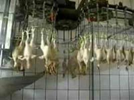 Mapa suspende venda de carne de frango com excesso de água