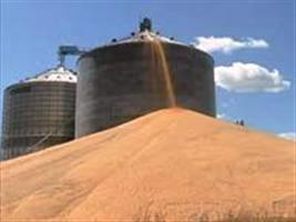 Cerca de 10% dos grãos se perdem do campo ao frete