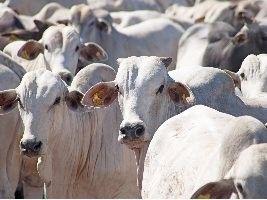 Embrapa publica inventário de recursos genéticos animais