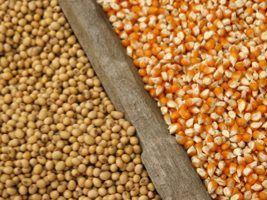Campo de Treinamento da Adama apresenta novas tecnologias para as culturas da soja e do milho em Maringá (PR)