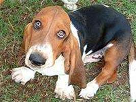 Transmissão da raiva pode ser evitada com a vacinação dos animais