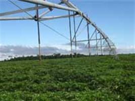 Uso adequado da irrigação pode garantir aumento de produtividade
