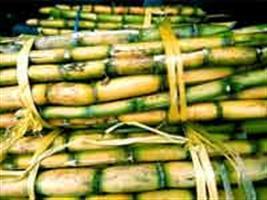 Guarani encerra safra de cana 2013/14 com 93% de mecanização da colheita