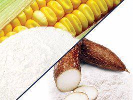 Governo vai vender milho a balcão e derivados de mandioca