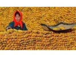 Brasil volta a enviar milho à China
