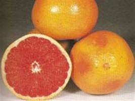 Mês de março marca início da colheita de citros no Rio Grande do Sul