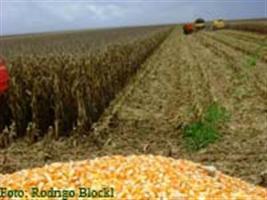 Milho: Exportadores vendem 127mil toneladas dos EUA para 2013/14 - USDA
