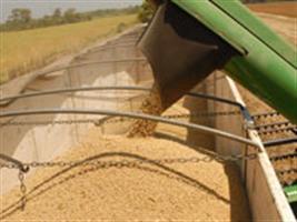 Colheita de soja em Sorriso deve ser concluída na próxima semana