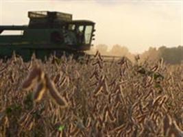 Soja: colheita em MT ultrapassa 64%; Sorriso é o mais adiantado