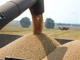 Show Rural - Argentina pode vender 5,5 milhões de toneladas de trigo ao Brasil em 2015