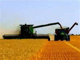 Governo eleva preço mínimo do trigo para R$ 531 por tonelada