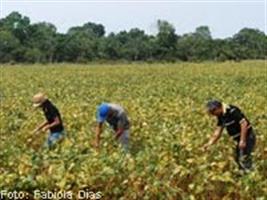 Produção de soja em áreas de arroz exige cultivares adaptadas à várzea