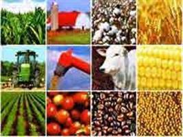 Alta do dólar eleva rentabilidade de agricultores no Brasil