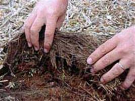 Manejo sustentável do solo