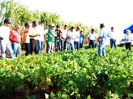 Dia de campo destaca produção de milho e feijão em larga escala