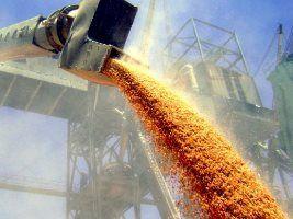 """Perdemos nossa """"melhor safra de trigo de todos os tempos"""", diz T&F"""