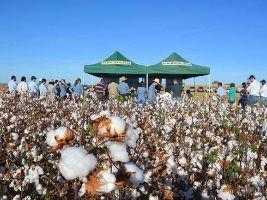 2ª Visita Técnica apresenta resultados sobre cultivares de algodão – safra 2015/16